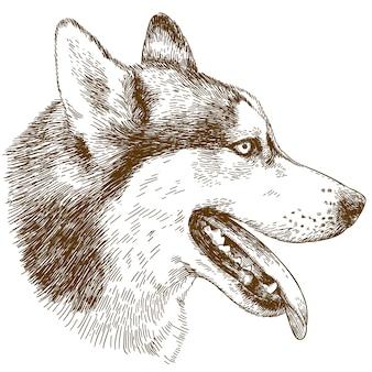 Gravure illustration de tête de chien husky