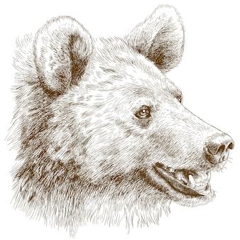 Gravure illustration de tête d'ours