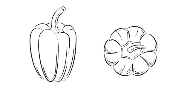Gravure vintage de poivre isolé sur fond blanc. illustration dessinée à la main pour affiche, étiquette, menu, web. aliments biologiques, sauce, composant de plats. vue depuis le sommet.