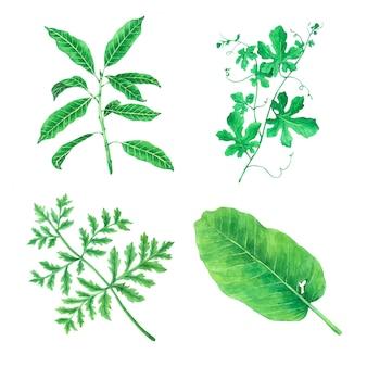 Green leave aquarelle