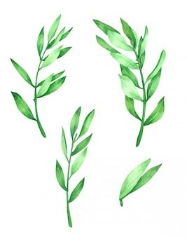 Green leave dessiné à la main peint dans la collection d'aquarelles