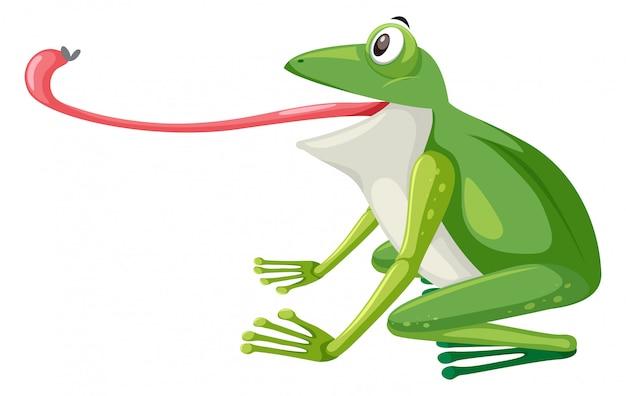Une grenouille verte sur fond blanc
