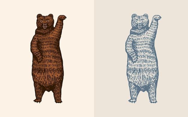 Grizzly dans le style vintage brun animal sauvage danse bête dessiné à la main vieux croquis gravé pour
