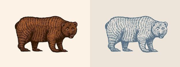 Grizzly dans le style vintage brun vue de côté animal sauvage dessiné à la main vieux croquis gravé pour tshirt