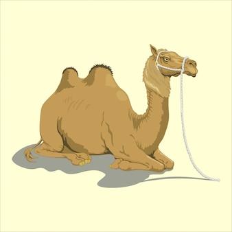 Gros chameau domestique
