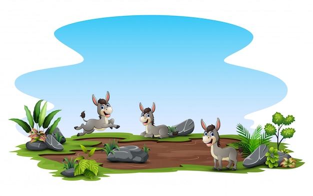 Groupe d'âne jouant sur le terrain