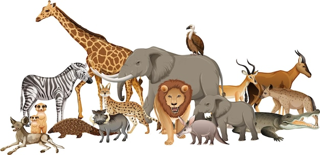 Groupe d'animaux sauvages africains sur blanc