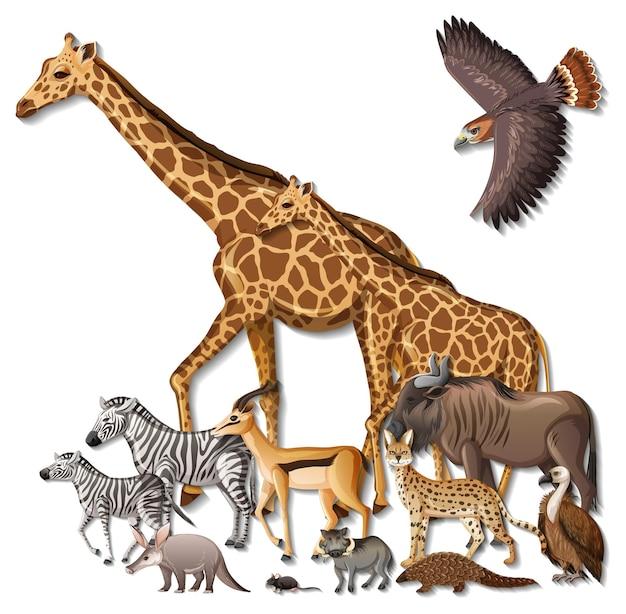 Groupe d'animaux sauvages d'afrique sur fond blanc