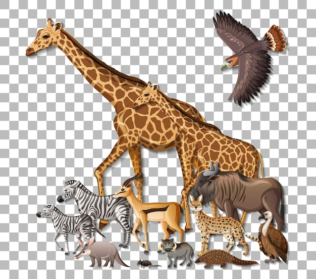 Groupe d'animaux sauvages d'afrique sur fond transparent