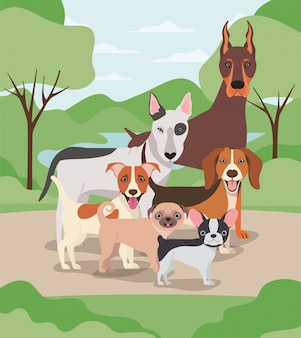 Groupe de chiens animaux de compagnie dans les personnages du camp