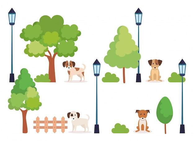 Groupe de chiens dans le parc
