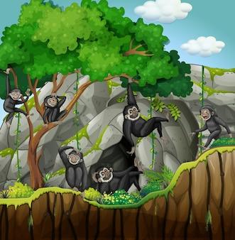 Groupe de gibbons escalade l'arbre