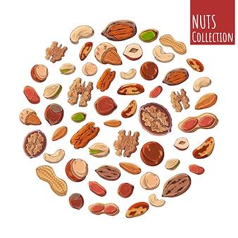 Groupe d'illustrations colorées vectorielles sur le thème des noix.