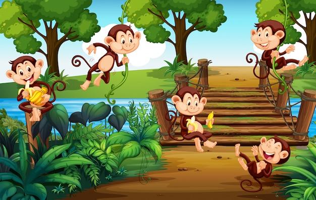 Un groupe de singes au parc