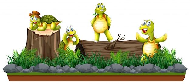 Groupe de tortues dans la nature
