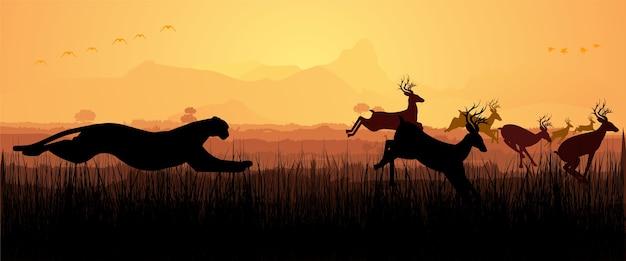 Guépards chassant des cerfs