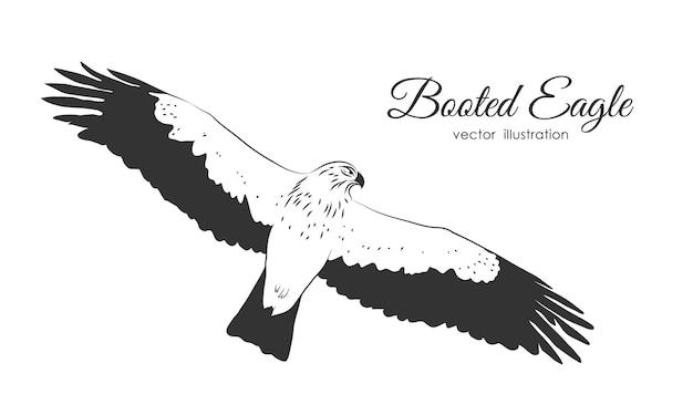 Hand drawn aigle botté en mouche sur fond blanc