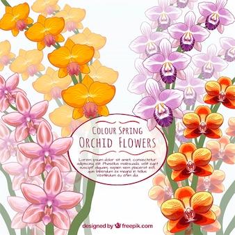 Hand drawn carte d'orchidée
