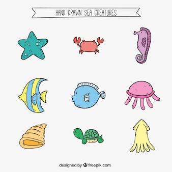 Hand drawn mer collection de créature dans des couleurs