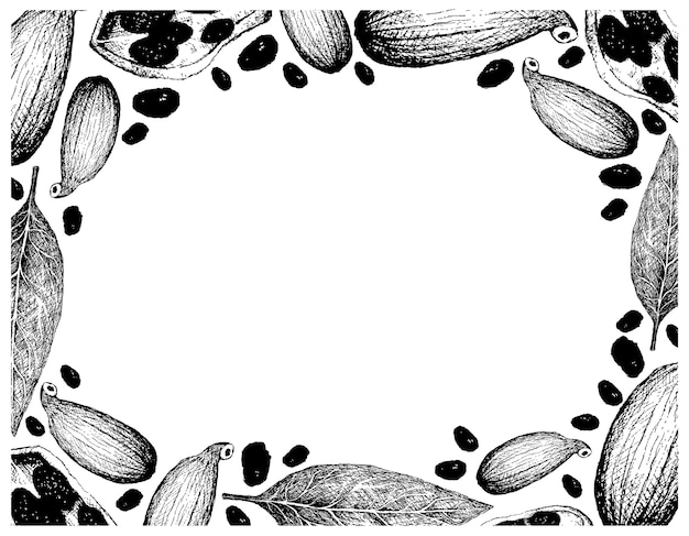 Hand drawn of bay laurel and cardamom pods frame