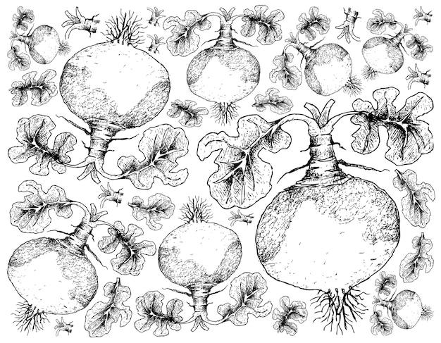 Hand drawn of swede sur fond blanc