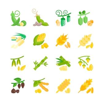Haricots et grains
