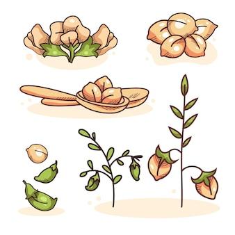 Haricots de pois chiches dessinés à la main et collection de plantes