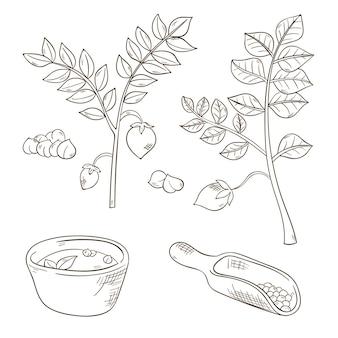 Haricots de pois chiches dessinés à la main et ensemble de plantes