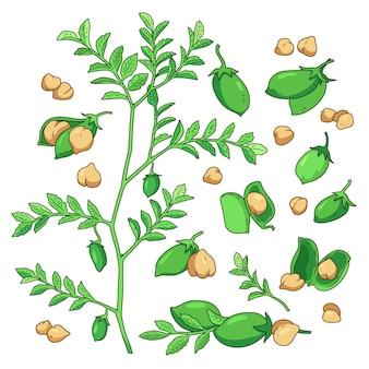 Haricots de pois chiches dessinés à la main et illustration de plantes