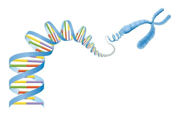 Hélice d'adn et diagramme de gène