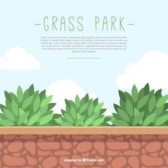 L'herbe fond du parc