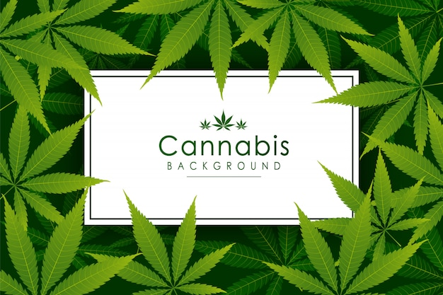 Herbe de marijuana drogue drogue feuille verte fond. cadre vector marijuana cannabis green leaf.
