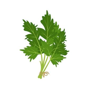 Herbe de persil source d'ingrédients verts de vitamine c pour les repas végétariens et un mode de vie sain