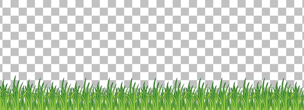 Herbe verte sur fond transparent