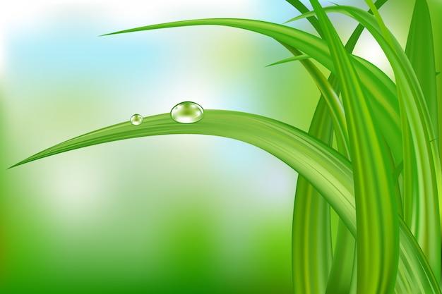 Herbe verte avec des gouttes d'eau sur beau fond