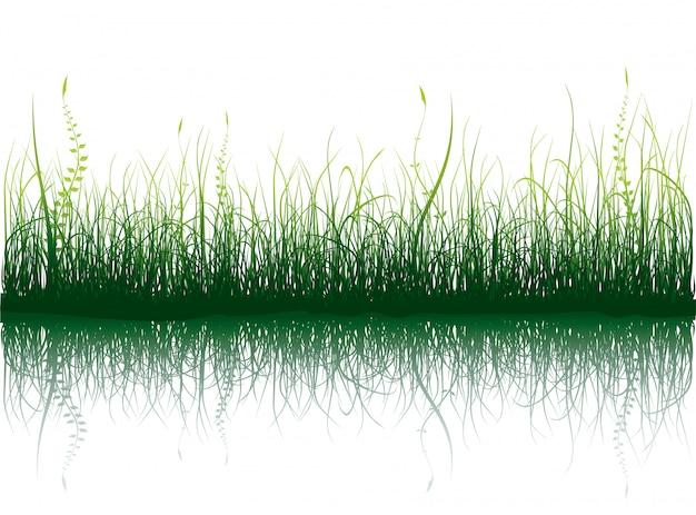 Herbe verte - isolé sur blanc