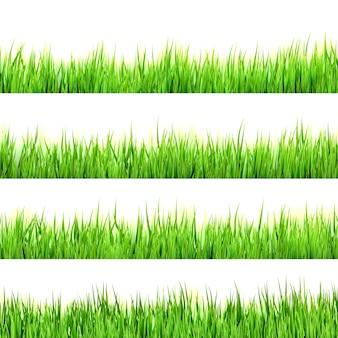 Herbe verte isolée sur blanc