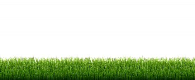 Herbe verte isolée sur fond blanc