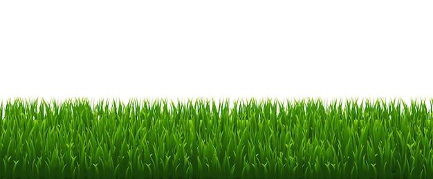 Herbe Verte Isolée Sur Fond Blanc Vecteur Premium