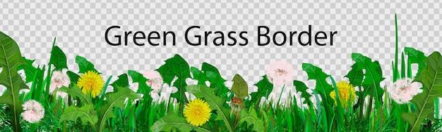 Herbe verte longitudinale à utiliser comme élément de conception isolé d'un fond transparent.