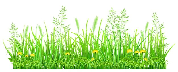 Herbe verte avec des pissenlits et des épillets sur fond blanc