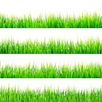 Herbe verte printanière fraîche isolée sur fond blanc.