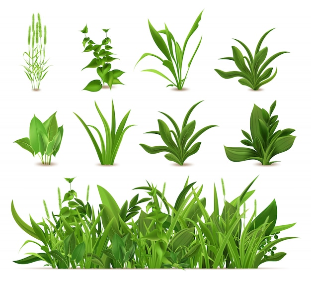 Herbe verte de printemps réaliste. plantes fraîches, herbe de croissance saisonnière de jardin, légumes verts botaniques, herbes et feuilles ensemble d'icônes. buissons de prairie de pelouse naturelle, bordure de végétation florale