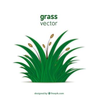 L'herbe verte