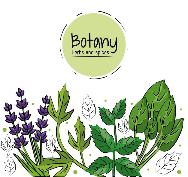 Herbes de botanique et d'épices sur fond blanc