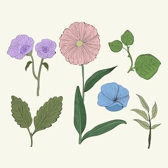 Herbes botaniques colorées dans un style vintage