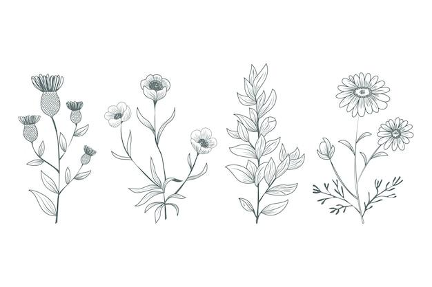 Herbes botaniques dessinées à la main