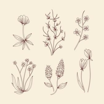Herbes botaniques et fleurs sauvages dans un style vintage