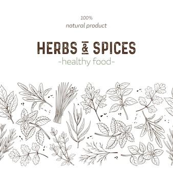 Herbes et épices à bordure transparente