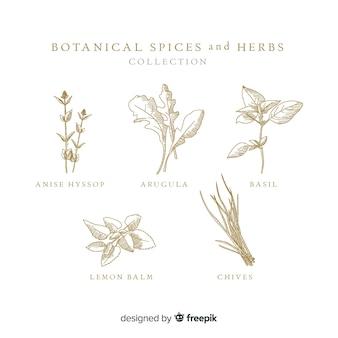 Herbes et épices botaniques dessinés à la main réaliste